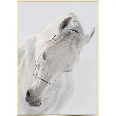 TABLOU 50X70 CM, HORSE II